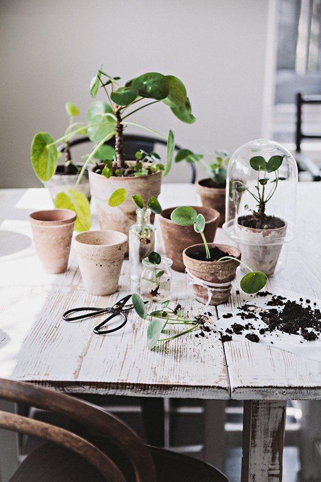 planter, frk.overspringshandling