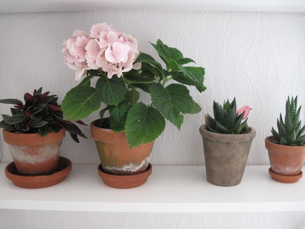 forelsket, grønt, planter, ikea