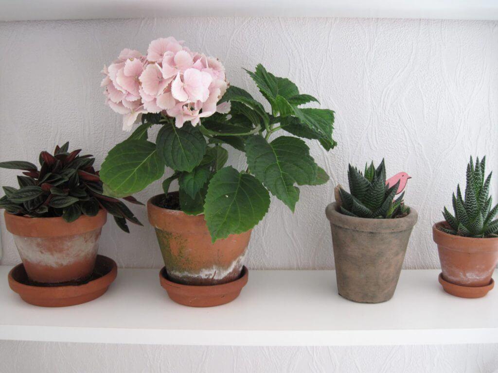 Grønne planter i min stue