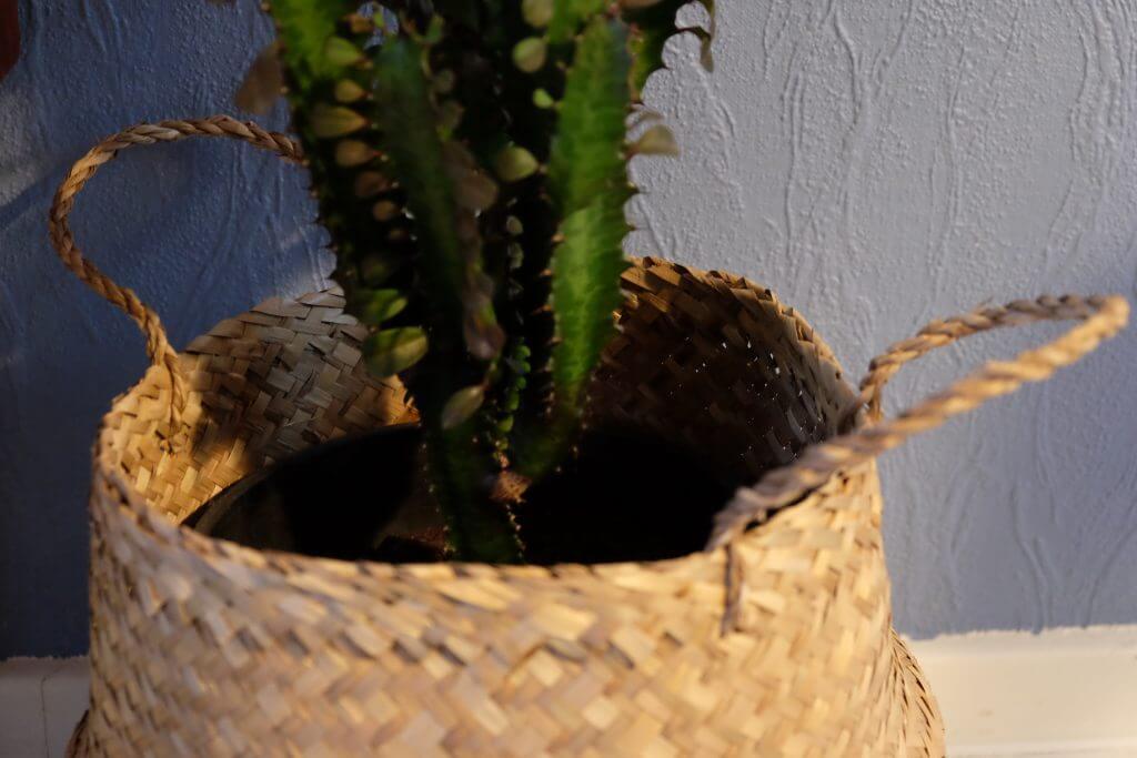 kurv, indkøb, bolig, boligen, nyt, kaktus, kurv til planten, cowboykaktus