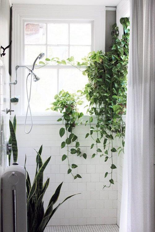 Planter, der hænger og kravler