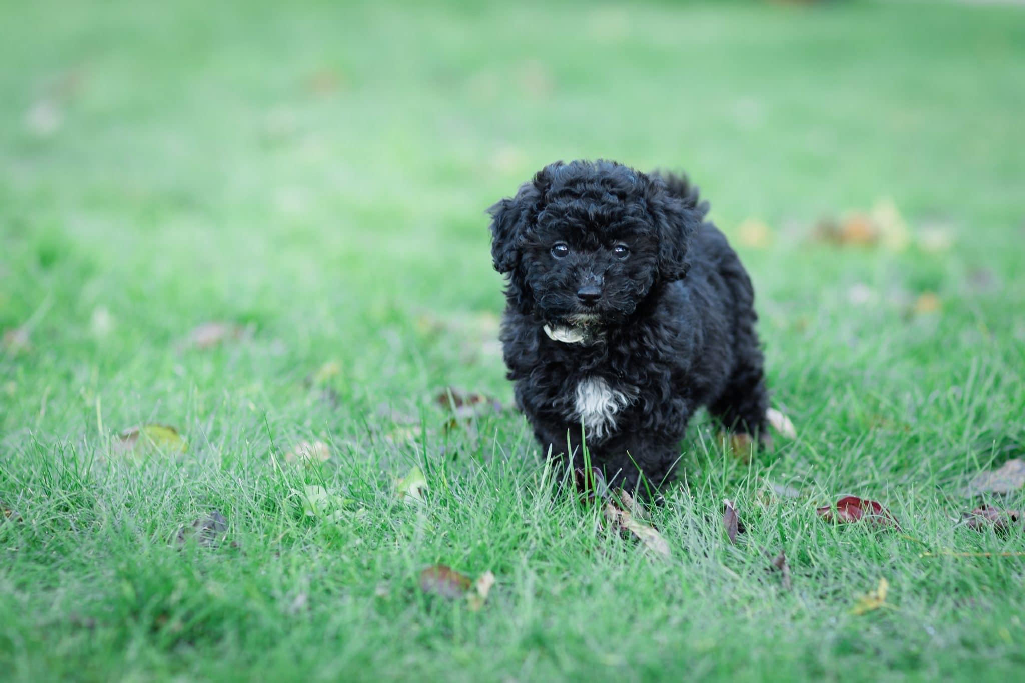 Molly – vores skønne hundehvalp